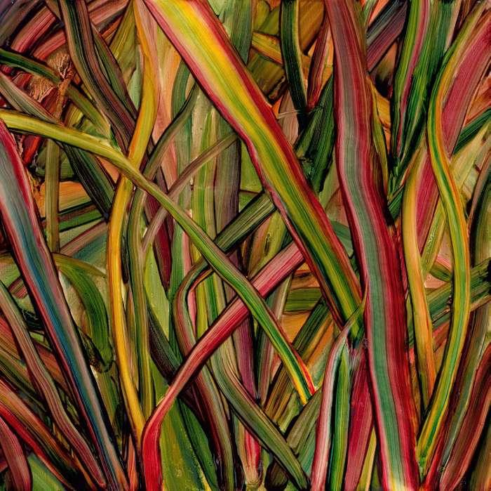 Where Wildness Grows - CD - Gengahr