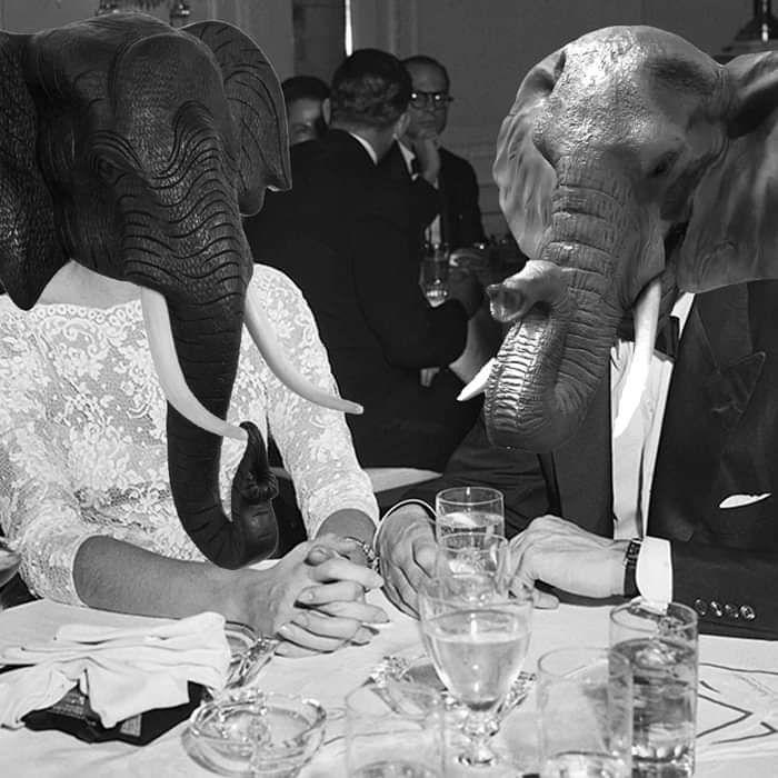 Chicharrero - Dapper Elephants Moan Over Supper - Speaking Tongues
